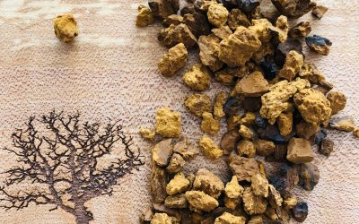 Things We Love: Chaga Mushrooms